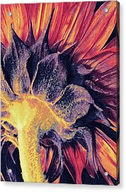 Acrylic Print featuring the mixed media Follow The Sun by Susan Maxwell Schmidt