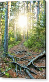 Follow Your Path Acrylic Print by Andrea Galiffi