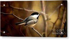 Following The Light Acrylic Print by Beve Brown-Clark Photography