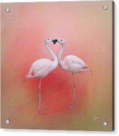 Fond Flamingos Acrylic Print by TK Goforth