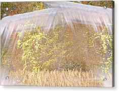 Fontaine Aux Fleurs Acrylic Print by Mary Mansey