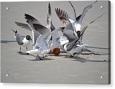 Food Fight - Gulls At The Beach Acrylic Print