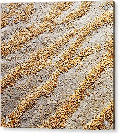 Foot Prints  -  Part 1 Of 3 Acrylic Print by Sean Davey