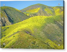 Foothills, Temblor Range Acrylic Print by Joseph Smith