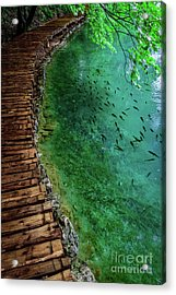 Footpaths And Fish - Plitvice Lakes National Park, Croatia Acrylic Print