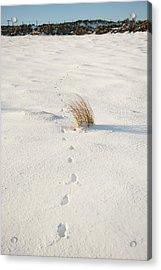 Footprints In The Snow II Acrylic Print