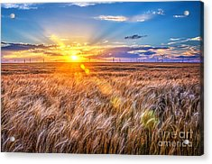 For Amber Waves Of Grain Acrylic Print