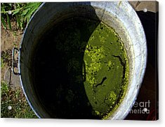 For Dirty Photos   Garden Mash Acrylic Print by The Stone Age