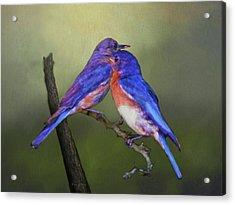 For Love Of Bluebirds Acrylic Print by Sandi OReilly