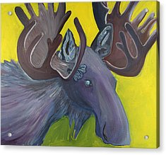 For Purple Mooses Majesty Acrylic Print by Amy Reisland-Speer