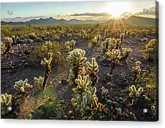 Sea Of Cholla Acrylic Print