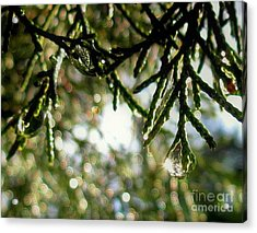 For The Love Of Bokeh 2012 Acrylic Print