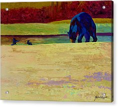 Foraging At Neets Bay - Black Bear Acrylic Print by Marion Rose