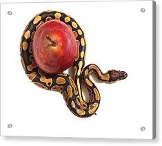Forbidden Fruit Acrylic Print by John Mueller