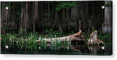Forbidden Swamp Acrylic Print