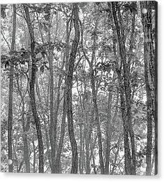 Forest #090 Acrylic Print