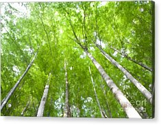Acrylic Print featuring the photograph Forest 1 by Jean Bernard Roussilhe