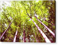Acrylic Print featuring the photograph Forest 2 by Jean Bernard Roussilhe