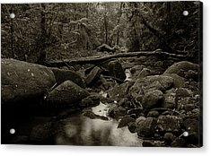 Acrylic Print featuring the photograph Atlantic Forest by Amarildo Correa