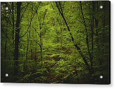 Acrylic Print featuring the photograph Forest Beckons by Shane Holsclaw