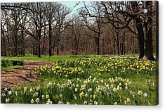 Forest Blessings In The Spring Acrylic Print