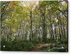 Forest Canopy Acrylic Print
