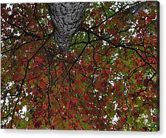 Forest Canopy Acrylic Print by JAMART Photography