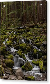 Forest Cathederal Acrylic Print by Mike Reid