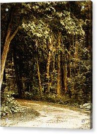 Forest Curve Acrylic Print
