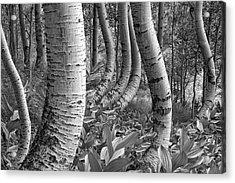 Forest Curves Acrylic Print