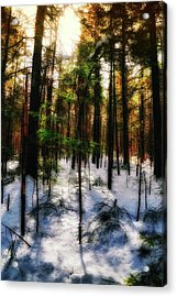Forest Dawn Acrylic Print