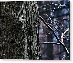 Forest Decor Acrylic Print by Scott Hovind