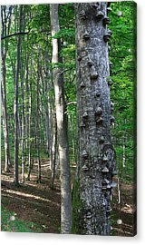 Forest Acrylic Print by Elisa Locci