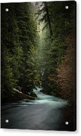 Acrylic Print featuring the photograph Forest Enchantment by Cat Connor