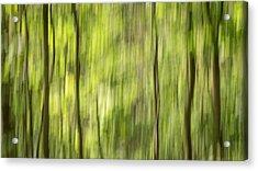 Forest Fantasy 1 Acrylic Print