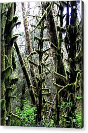 Forest Finery Acrylic Print by Will Borden