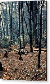 Fir Forest-1 Acrylic Print by Henryk Gorecki