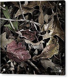 Forest Floor - Leaf 10 Acrylic Print by Pete Hellmann