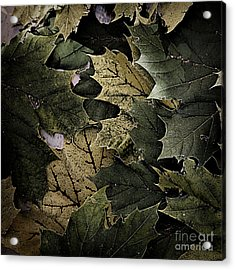 Forest Floor - Leaf 12 Acrylic Print by Pete Hellmann