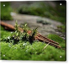 Forest Floor 2 Acrylic Print