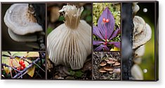 Forest Floor Acrylic Print by Lisa Knechtel