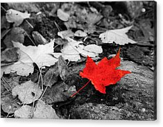 Forest Floor Maple Leaf Acrylic Print