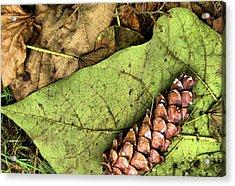 Forest Floor Still Life Acrylic Print