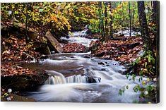 Acrylic Print featuring the photograph Forest Gem by Parker Cunningham