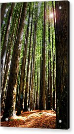 Forest Glade Acrylic Print