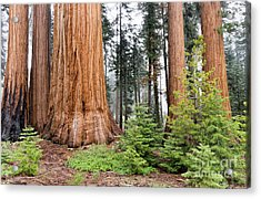 Acrylic Print featuring the photograph Forest Growth by Peggy Hughes