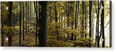 forest I Acrylic Print