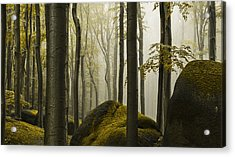 forest II Acrylic Print by Lukas Holas