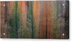 Forest Illusion- Autumn Born Acrylic Print