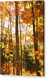 Forest In Fall Acrylic Print by Utopia Concepts